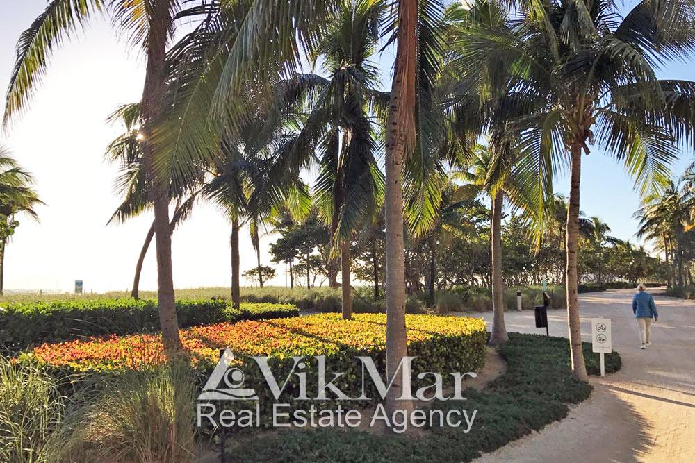 Decorative plants of Miami Beach